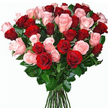 Red and pink roses 50 cm (variable quantity of flowers)