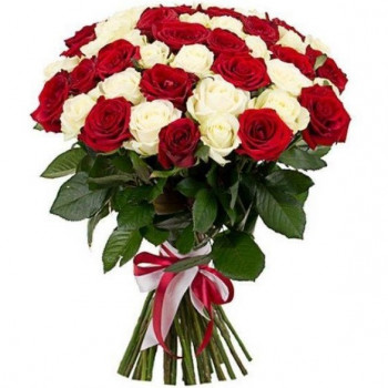 Red and white roses 50 cm (select number)