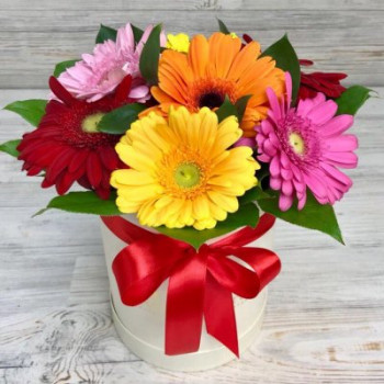 7 Mixed Gerberas in Box