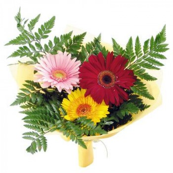 3 gerberas with nice greens