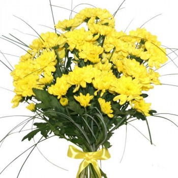 7 yellow chrysanthemums with greens