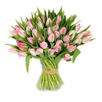 Pink tulips (select number)